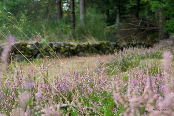 camp celtique (1 sur 1)